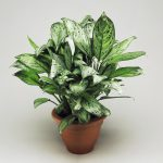 Buying houseplants – Where indoor plants feel at ease