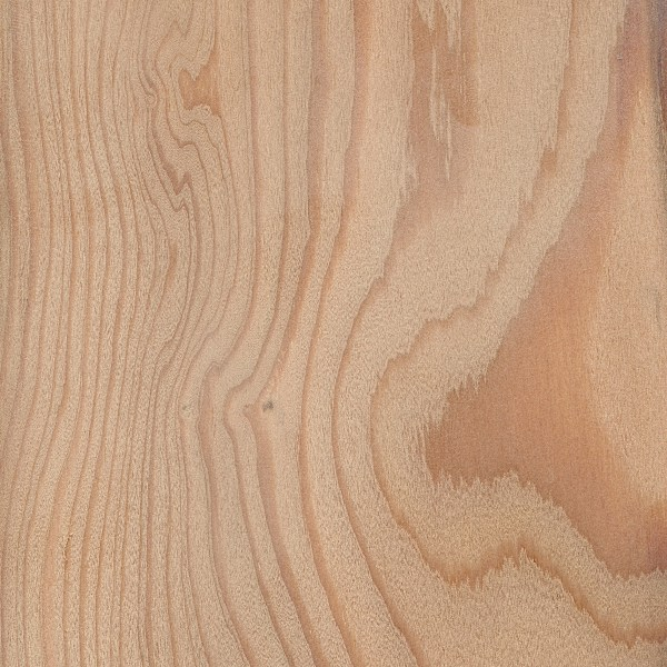 European Larch | The Wood Database - Lumber Identification (Softwood)