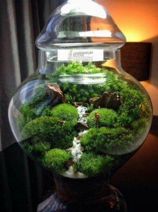 42 Awesome Bonsai Terrarium Jars Ideas | Mossy | Terrarium jar