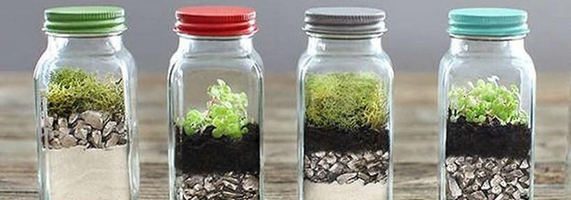 80 Awesome Bonsai Terrarium in the Jars Ideas - DecOMG