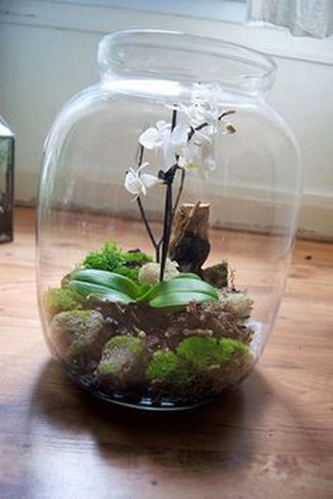 Bonsai Terrarium Miniature Landscaping Jars 8
