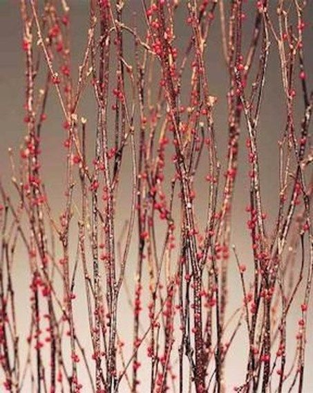 39 Stylish Branches Dried Tree Décor Ideas Can Inpsire | Projects to