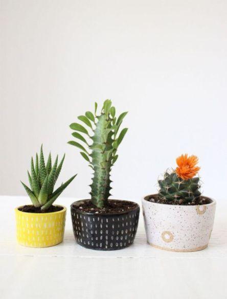 Cute Cactus Decor Ideas For Your Home 78 | صبار الصبر | Pinterest