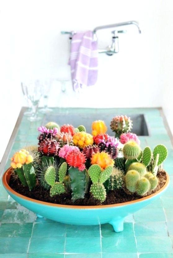 cactus decoration ideas u2013 maxweb.xyz