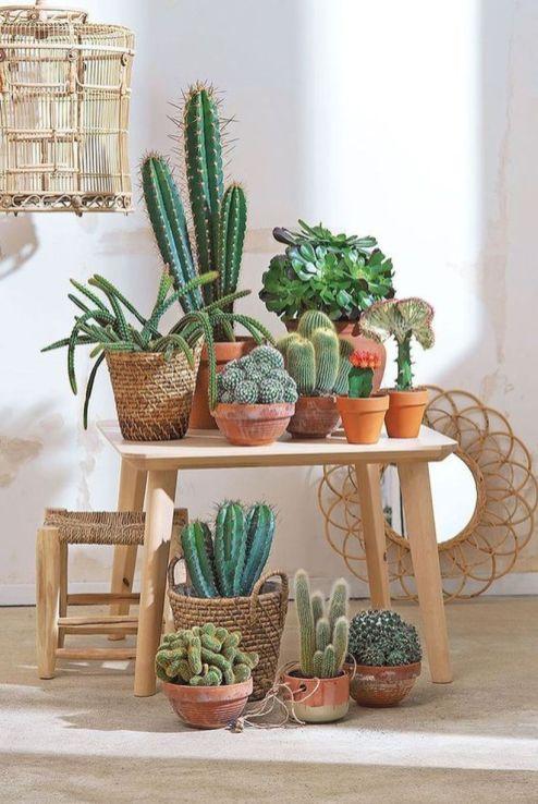 Cactus Decor Ideas For Your Home