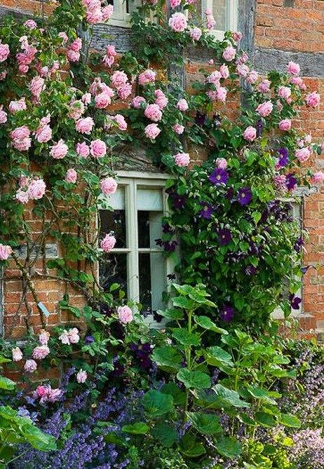 37 Stylish Climbing Roses House Ideas | Climbing plants | Pinterest