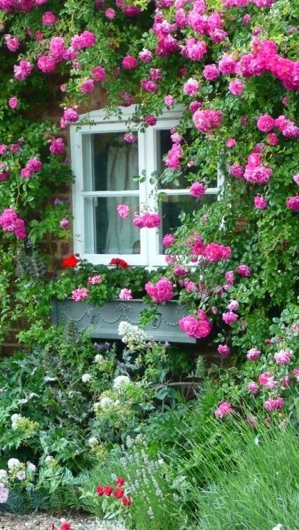 Climbing roses - I would love this on my house! | Ideas for the