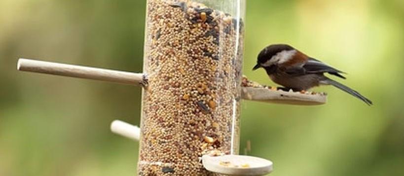 50 Creative Ideas to make DIY Bird Feeder in your Home Yard