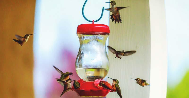 16 DIY Homemade Hummingbird Feeder Ideas That Will Attract Them to