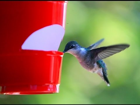 How to make a cheap hummingbird feeder - YouTube
