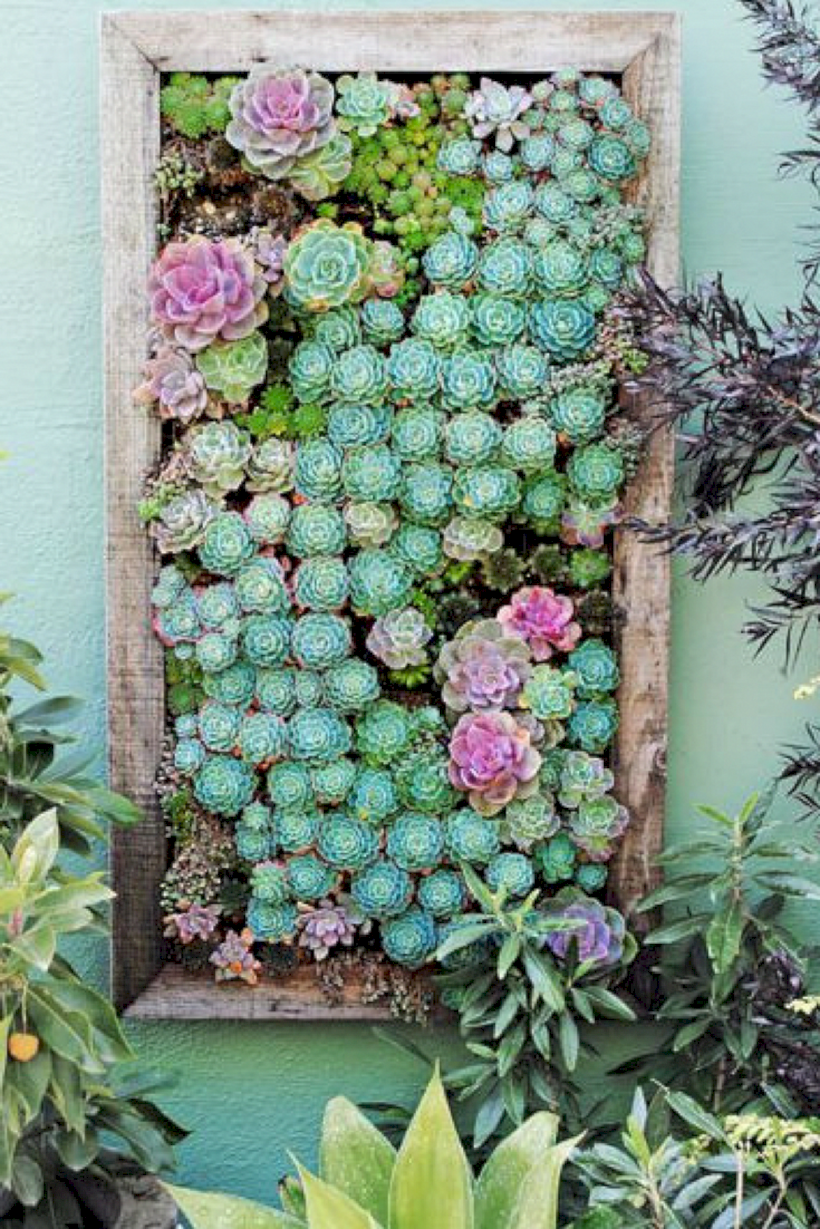 46 Creative Ways to Make an Enchanting Succulent Garden in Your
