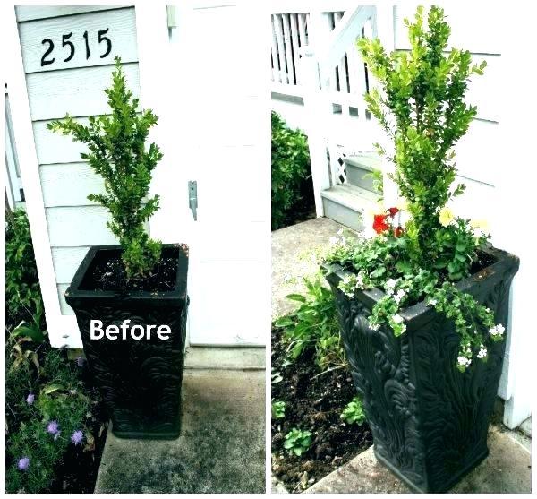 Front Door Planter Ideas Brilliant Planters Flower Pots Pretty