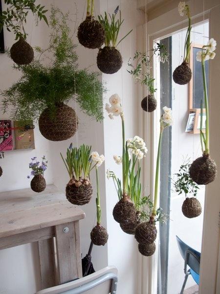 21+ Best Indoor Gardening Ideas for Beginners and Advanced Gardeners