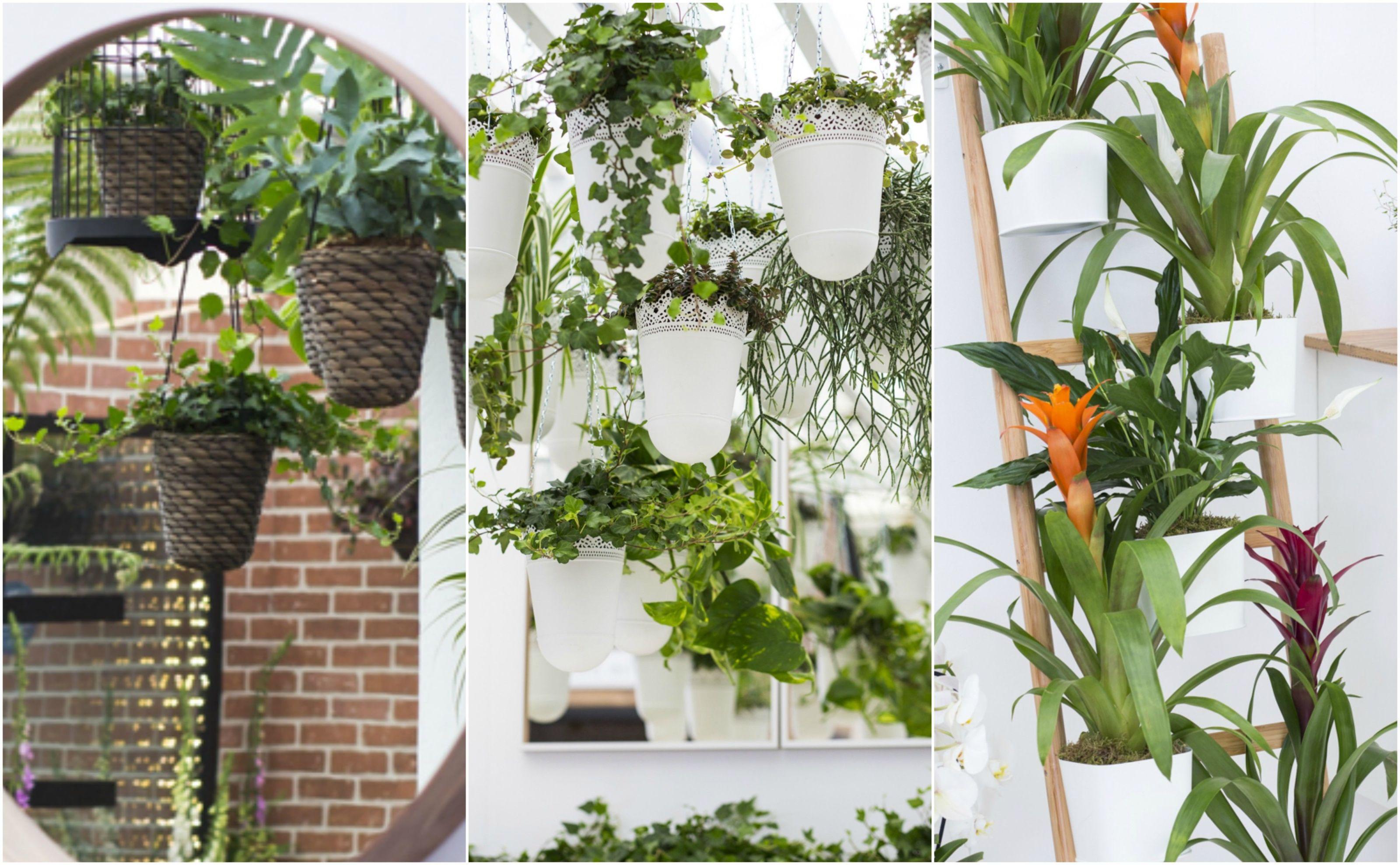 5 Easy Indoor Garden Ideas - Small Space Ideas