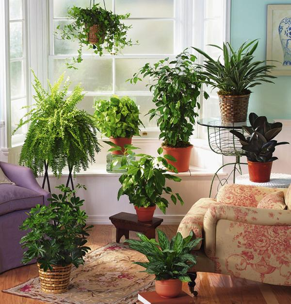 Fern Decor for Room Windows Facing North and Interiors Lacking Sunshine