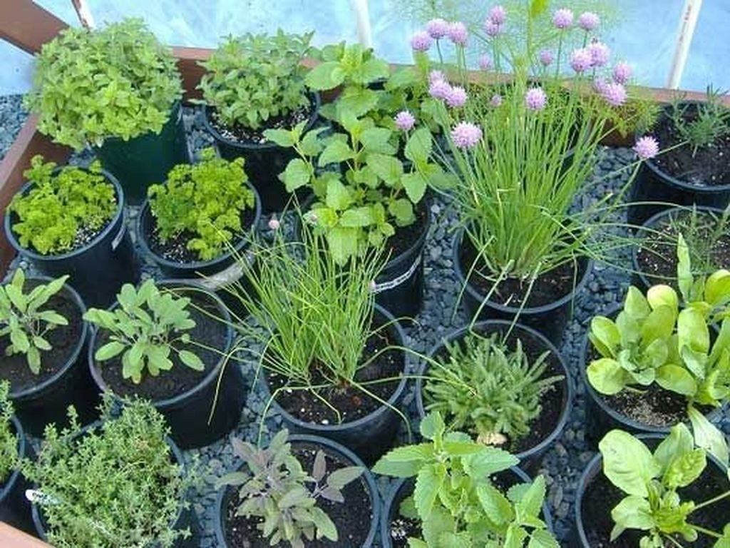 48 nice fresh ideas growing herbs gardens ideas - TREND4HOMY