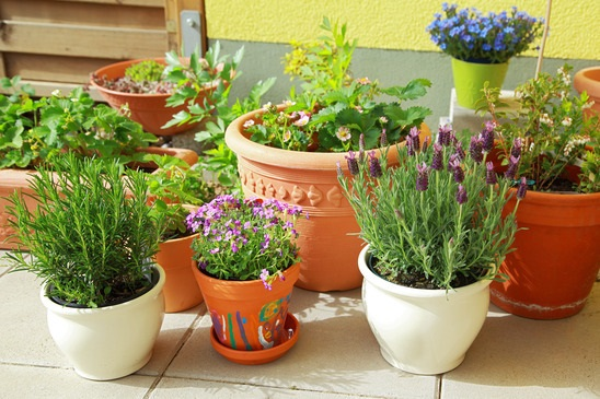 10 Easy Kitchen Herb Garden Ideas to Grow Culinary herbs