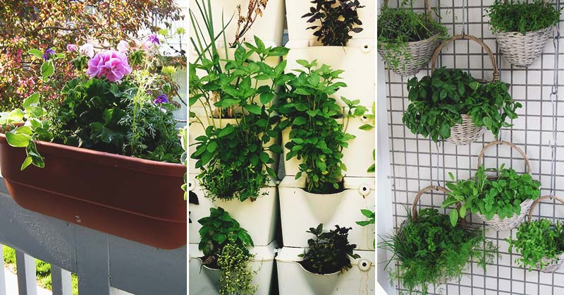 Nice Fresh Ideas Growing Herbs Gardens Ideas