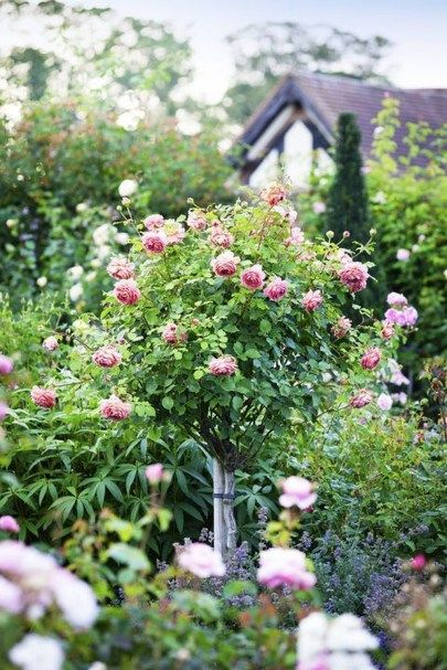 44 Beautiful Rose Flower Garden Ideas | Roses | Growing flowers
