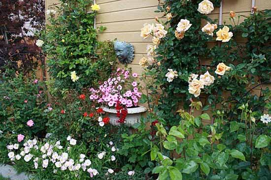 Roses for Beautiful Outdoor Decor, Charming Garden Designs and