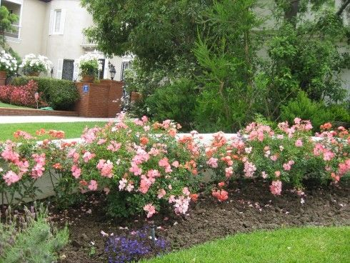 Pictures Of Flower Beds,Photos, Design For Garden Flower Beds