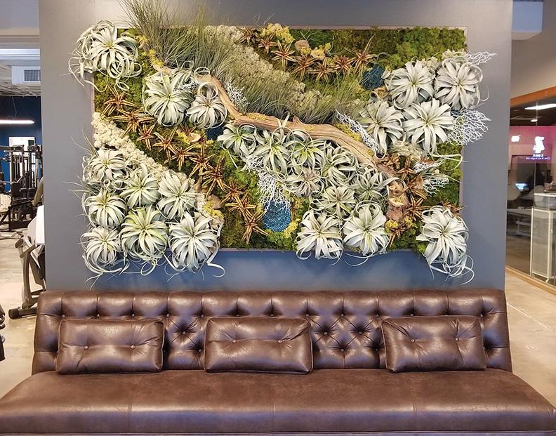 Living Walls, Vertical Gardens, Plant Walls, Moss Walls