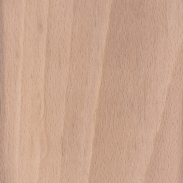 European Beech   The Wood Database - Lumber Identification (Hardwood)