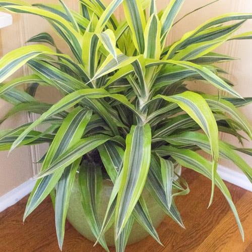 10 Best Indoor Plants for Your Home | Calloway's Nursery
