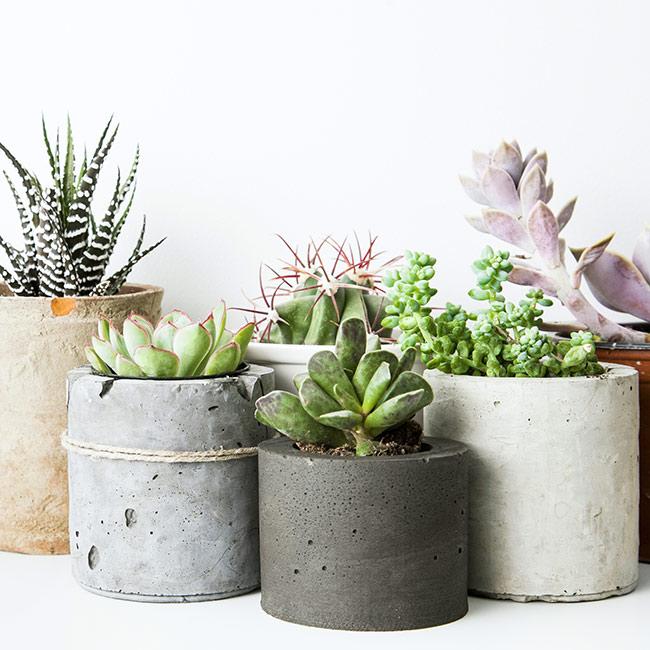 5 Best Low Maintenance Indoor Plants | Pollen Nation