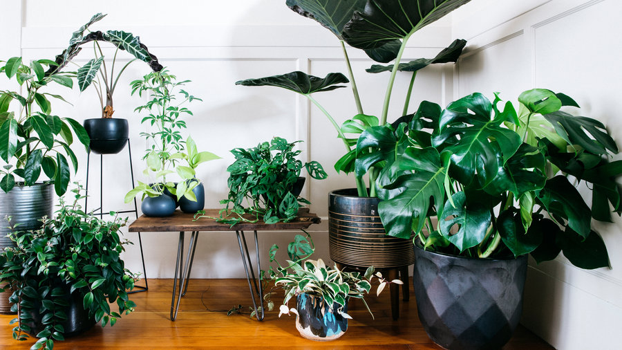 Ultimate Guide to Indoor Plants - Sunset - Sunset Magazine