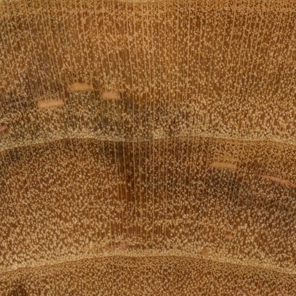 Plum | The Wood Database - Lumber Identification (Hardwood)