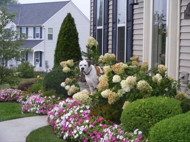Beautiful Flower Frontyard Ideas 9