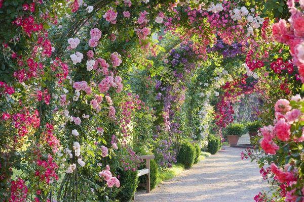 spectacular rose gardens designs arch of roses garden path ideas