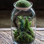 Bonsai Terrarium Jars Ideas