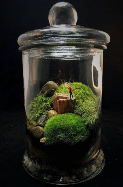 42 Awesome Bonsai Terrarium Jars Ideas | Mossy | Pinterest | Bonsai
