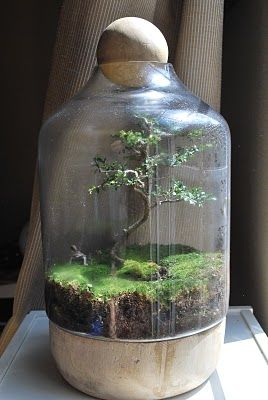 amazing bonsai terrarium; I want the center of Willow to look like a