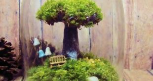Bonsai Terrarium For Landscaping Miniature Inside The Jars 59