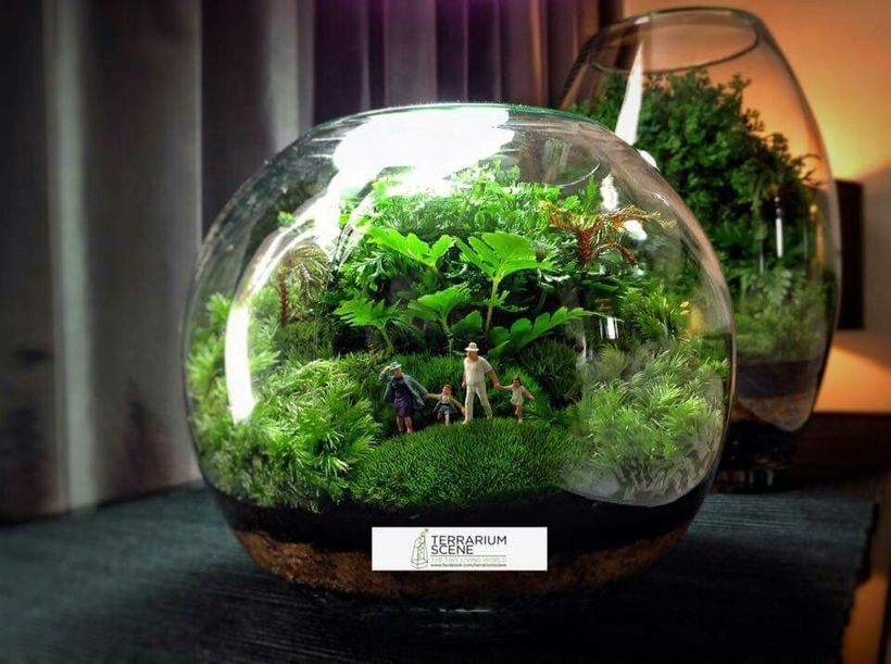 100+ Stunning Bonsai Terrarium for Miniature Landscaping in the Jars