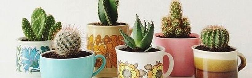 Cactus Decor Ideas For Your Home 1