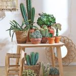 Cactus Decor Ideas For Your Home