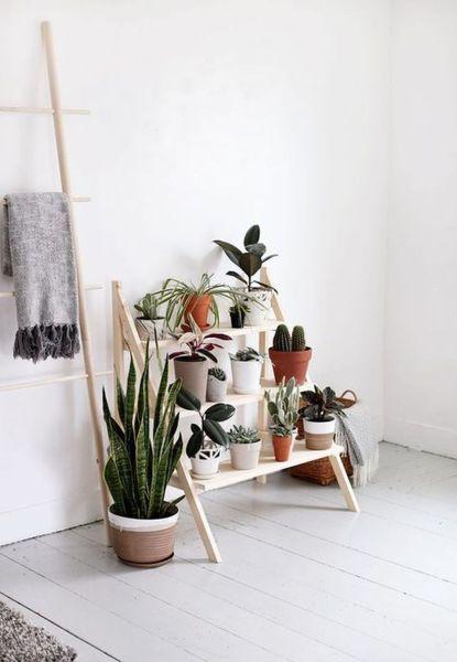Cute Cactus Decor Ideas For Your Home 64 | صبار الصبر | DIY Home