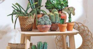 Cute Cactus Decor Ideas For Your Home 12   succulents   Plants