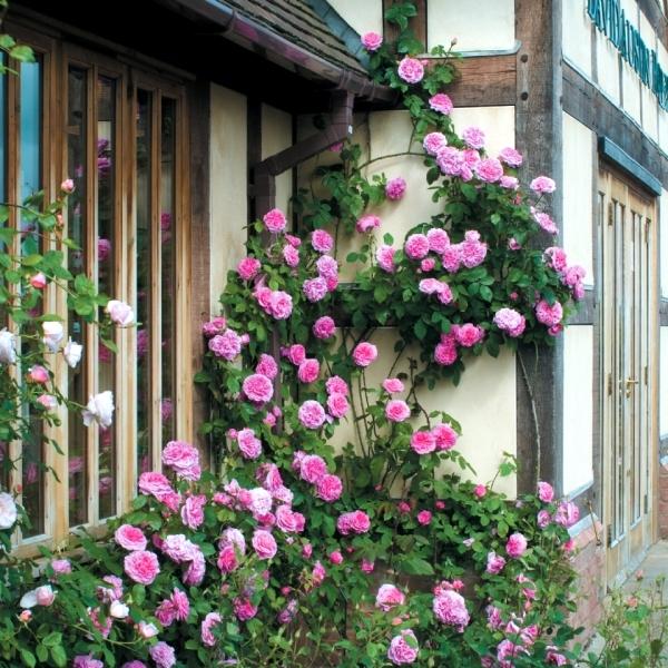 Spring Rose cut u2013 cut and keep climbing roses | Interior Design