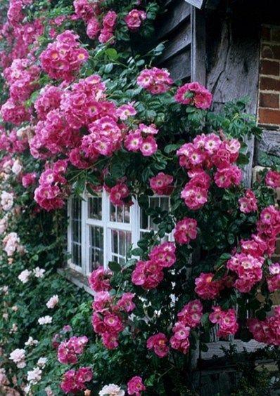 37 Stylish Climbing Roses House Ideas | Yard | Climbing roses, Rose