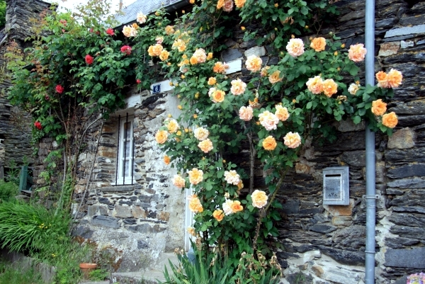 Climbing Roses House - mathwatson