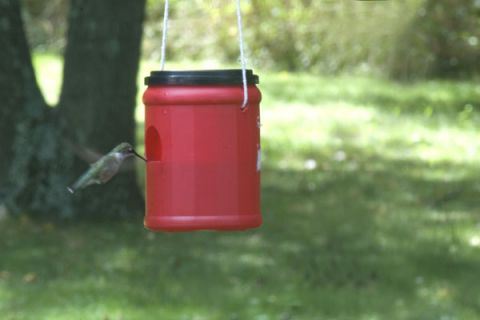 16 DIY Homemade Hummingbird Feeder Ideas That Will Attract Them to