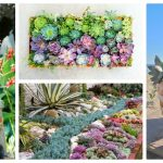 Enchanting Succulent Garden For Backyard