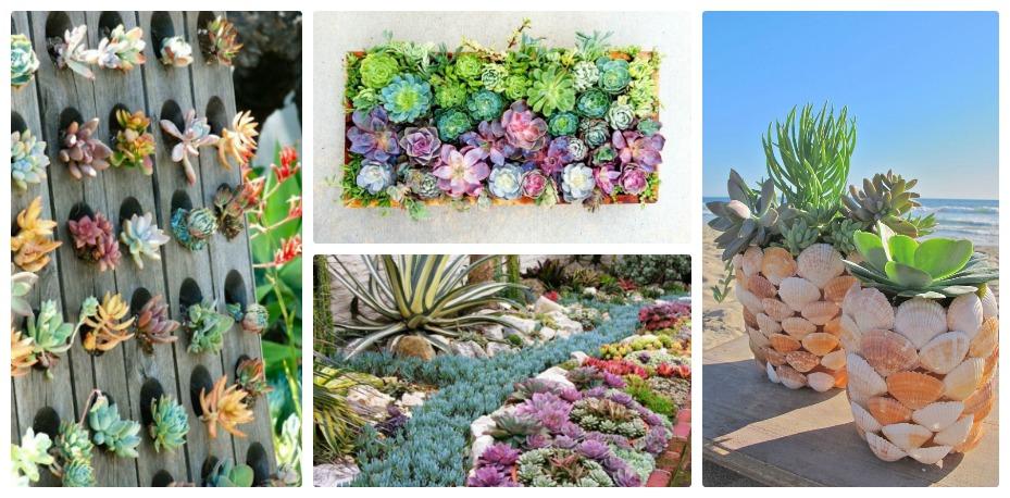 Enchanting Succulent Garden For Backyard