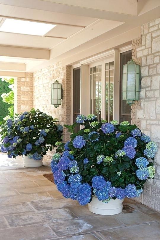 Front Door Flowers Best Front Door Flower Pots Ideas And Designs For