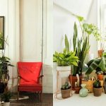 Indoor Plants Decor Ideas